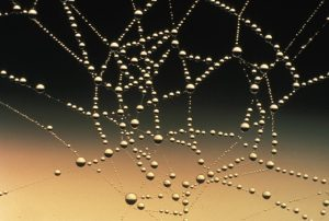 close up of spider web with droplets of water on it